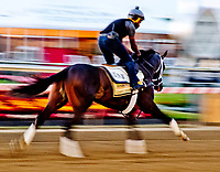 BALTIMORE, MD - MAY 18:  Always Dreaming exercises in preparation for the Preakness Stakes this Saturday at Pimlico Race Course on May 18, 2017 in Baltimore, Maryland.(Photo by Scott Serio/Eclipse Sportswire/Getty Images)