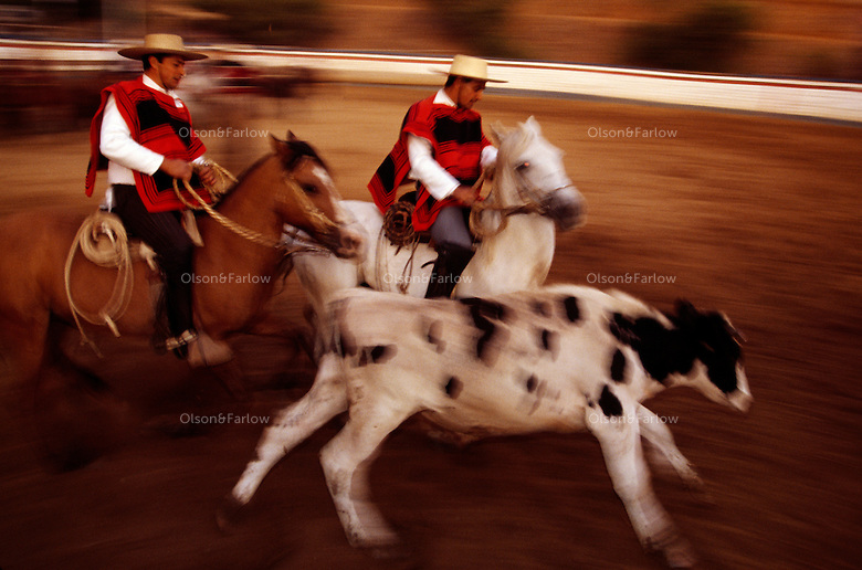 Hausos topped with Andalusian hats or flat-brimmed sombreros compete in teams at a rodeo in the Rodeo InterAsociacional Marga-Marga northwest of Santiago, Chile. The teams called colleras run a cow out of a pen and pin it while racing against the clock.