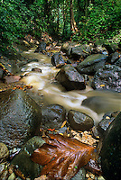 731400023 milky water flows down a stream in the protected edmond forest preserve on the caribbean island of saint lucia