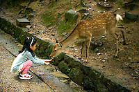 Deer welcome visitors in Nara-koen park in Nara, Japan, on October 10, 2010. Photo by Lucas Schifres/Pictobank
