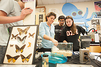 Zoology lab with Professor Shana Goffredi, Oct. 14, 2009. (Photo by Marc Campos, Occidental College Photographer)