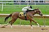 Briar Mojo winning at Delaware Park on 8/21/14