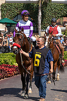 DEL MAR, CA  AUGUST 4:  #6 Carnivorous, ridden by Mario Gutierrez, in the paddock before the Graduation Stakes  in the stretch on August 4, 2018 at Del Mar Thoroughbred Club in Del Mar, CA.  (Photo by Casey Phillips/Eclipse Sportswire/ Getty Images)