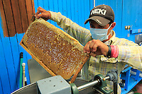 At the honey house, the honey is taken out of the wax cells through centrifugal force.///A la miellerie, le miel est sorti des cellules de cire par la force centrifuge.