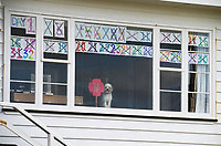 Charlie the dog stands guard beneath a tally of lockdown days. Owhiro Bay at 11am, Sunday during lockdown for the COVID19 pandemic in Wellington, New Zealand on Sunday, 26 April 2020. Photo: Dave Lintott / lintottphoto.co.nz
