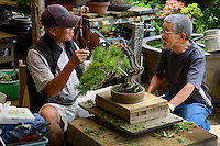 Students at a bonsai class in the Tojuen bonsai nursery. Bonsai-mura, Omiya, Saitama Prefecture, Japan, June 25, 2013. The Omiya Bonsai Village was founded in 1925 and is Japan's most famous production center for bonsai.