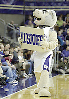 February 10, 2008:   Washington Huskies mascot Hairy pumps up the crowd against UCLA.  Washington defeated UCLA 71-61 at bank of America Arena is Seattle, WA.