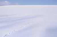 Feldhase, Feld-Hase, Hase, Trittsiegel, Spur, Pfotenabdrücke im Schnee, Lepus europaeus, Lepus capensis, Brown hare, Lièvre brun