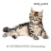 Xavier, ANIMALS, REALISTISCHE TIERE, ANIMALES REALISTICOS, FONDLESS, photos+++++,SPCHWS646,#A#
