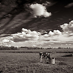 DINNER TIME #blackandwhite #monochrome #wisconsin #midwestmemoir #photograph #landscape #B&W #wisconsinphotograph #photography #wisconsinphotography #black&white  #midwest #prairie #clouds #cloudporn #theprintswap #americanmidwest #fineartphotography