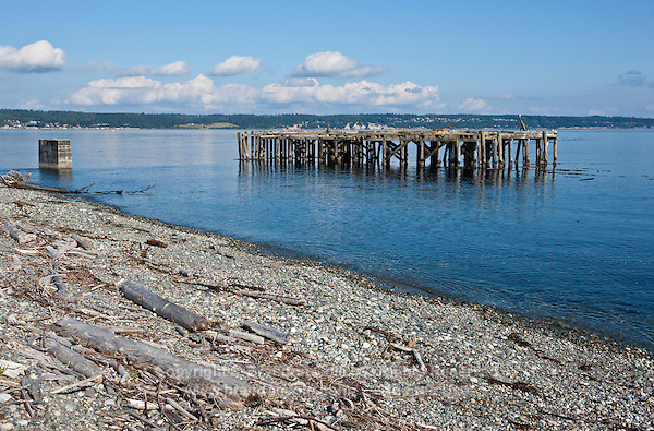 QX1443-D. The pier pilings off Fort Casey State Park on Whidbey Island provide habitat for a wide variety of fish and invertebrates. This area, and the adjacent rocky breakwater are commonly known as Keystone Jetty, a favorite scuba diving site with easy shore access. Washington, USA, Pacific Ocean.<br /> Photo Copyright &copy; Brandon Cole. All rights reserved worldwide.  www.brandoncole.com