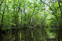 Big Davis Creek