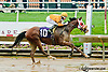 Spicer Cub winning at Delaware Park on 7/1/13