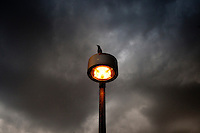 wildart 167035 10/20/10-  A bird sits on top of a light near the Tempe Town Lake as rain clouds move into the Vally Wednesday morning. Pat Shannahan/ The Arizona Republic)