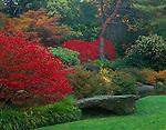 Kubota Gardens, Seattle, WA<br /> Vibrant red autumn leaves of burning bush (Euonymus alatus) accentuates a garden bed near the ponds in the Tom Kubota Stroll Garden