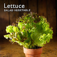 Lettuce Salad Pictures | Lettuce Food Photos Images & Fotos