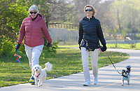 NWA Democrat-Gazette/DAVID GOTTSCHALK Kathleen Barta (left), with Frisco, and Marianne Neighbors, with Perky, walk Tuesday, April 10, 2018, on the Razorback Greenway near Sanders Avenue in Springdale.