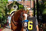 DEL MAR, CA  AUGUST 25:   #6 Improbable,  in the paddock before the Shared Belief Stakes on August 25, 2019 at Del Mar Thoroughbred Club in Del Mar, CA. ( Photo by Casey Phillips/Eclipse Sportswire/CSM)