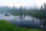 Landscape  near Dawson City, The Yukon Terrotery, Canada