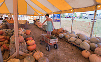 NWA Democrat-Gazette/J.T. WAMPLER Kristin Teel of McDonald County MO. collects various pumpkins and gourds for a display Wednesday Sept. 23, 2015 while working at the Rainbow Curve Fall Harvest Pumpkin Stand in Bentonville. Wednesday was the first day of Autumn. The stand will be supplied until Halloween and any remaining pumpkins or gourds will be donated to the Wild Wilderness Drive Through Safari in Gentry for the animals to eat.