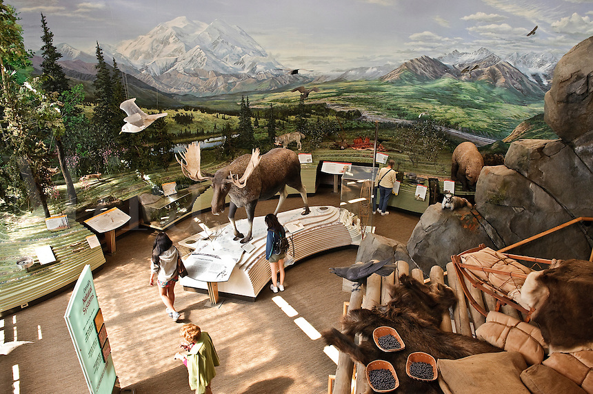 Display of wildlife and habitat of Denali National Park at the park visitors center, Alaska, USA