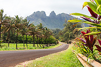Country road with ti plants, palms, and mountains at Anahola Beach, Kaua'i.