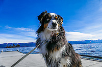 Molly Montana at Flathead Lake