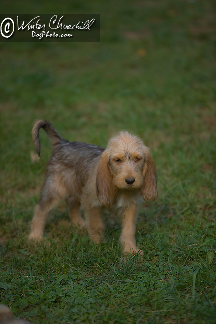 Otterhound<br /> <br /> <br /> <br />  Shopping cart has 3 Tabs:<br /> <br /> 1) Rights-Managed downloads for Commercial Use<br /> <br /> 2) Print sizes from wallet to 20x30<br /> <br /> 3) Merchandise items like T-shirts and refrigerator magnets
