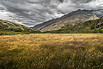 Straw coloured grass blows in the wind on the Diamaond Lake Walk near Treble Cone on the south island of New Zealand.