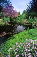 Backyard Pond, New Jersey