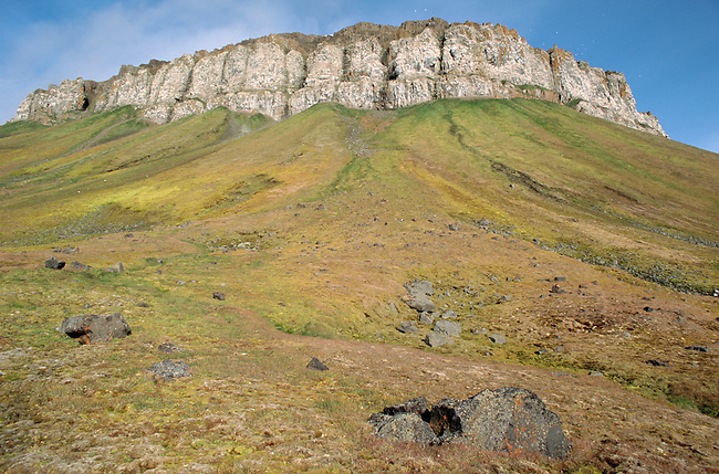 Cape flora with its towering bird cliffs on Northbrook Island. Franz Josef Land, Russia