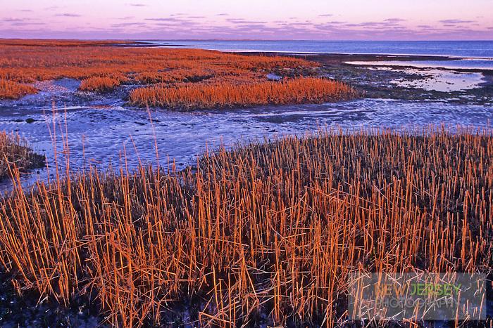 Tidal Salt Marsh, at low tide.  Barnegat Bay, New Jersey