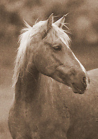 Palomino Horse - Utah<br />