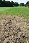 LEGEMEER - Overlast door  engerlingen op de baan. BurgGolf golfbaan St. Nicolaasga. COPYRIGHT KOEN SUYK