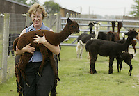 Barb Wille carries a young alpaca into the barn Sunday, July 2, 2006, in Valley City, Ohio. Barb, who raises 23 alpacas with her husband Ed, say they have earned $200,000 since starting up in 1994 by selling alpacas, winning stud fees and housing 12 of the furry creatures for $3 a day.<br />