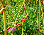 Eastern Tiger Swallowtail Butterfly. Image taken with a Fuji X-H1 camera and 80 mm f/2.8 macro lens + 1.4x teleconverter