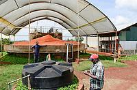 KENYA Thika near Nairobi, Simbi Roses is a fair trade rose flower farm which produces rose as cutting flowers for export to europe, biogas plant / KENIA Thika bei Nairobi, Simbi Roses ist eine fairtrade zertifizierte Blumenfarm die Rosen fuer den Export nach Europa anbauen, Biogasanlage