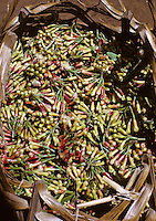 Zanzibar, Tanzania, East Africa, cloves, spice, spices, basket, harvest, agriculture, farming, plantation, cultivation, export