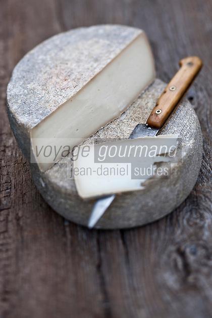 Europe/Europe/France/Midi-Pyrénées/46/Lot/Saint-Sulpice: Ferme du Mas de Thomas -La tomme des Causses, Tomme de chèvre