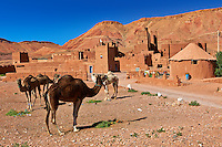 Camels in front of the Glaoui Kasbah's of Tamedaght in the Ounilla valley set surrounded by the hammada (stoney) desert in the foothills of the Altas mountains, Tamedaght, Morroco.