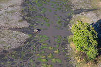 Aerial view of elephnat crossing a muddy stream near Victoria Falls