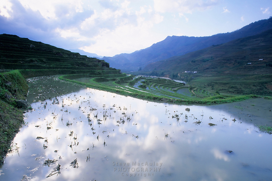 Terraced rice paddy flooded with water, Sapa Region, Northern Vietnam