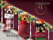 GIORDANO, CHRISTMAS ANIMALS, WEIHNACHTEN TIERE, NAVIDAD ANIMALES, paintings+++++,USGI2936,#xa# ,dog,dogs