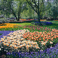 Netherlands, South Holland, near Lisse: Keukenhof also known as the Garden of Europe,  the world's largest flower garden | Niederlande, Suedholland, bei Lisse: hollaendische Parkanlage Keukenhof, ein Touristenmagnet zur Zeit der Tulpenbluete