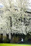 1704-10 GCS Spring 0044<br /> <br /> 1704-10 GCS Spring<br /> <br /> April 6, 2017<br /> <br /> Photography by Nate Edwards/BYU<br /> <br /> &copy; BYU PHOTO 2016<br /> All Rights Reserved<br /> photo@byu.edu  (801)422-7322