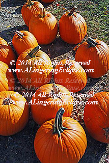 A Pumpkin Patch for Haloween