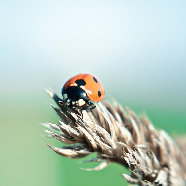 Lensbaby ladybird #1
