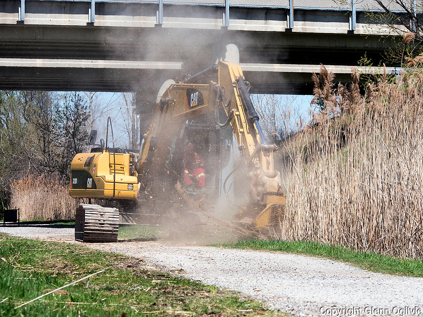 A large back hoe was used to clear a large section of phragmites  from the Howard Watson Trail between Michigan Ave., and Exmouth Street. <br /> <br /> The City of Sarnia will engage in a two-phase plan to eradicate phragmites, an invasive perennial grass, along the Howard Watson Nature Trail. This is an area with a high concentration of phragmites that has been problematic with fires in the past.