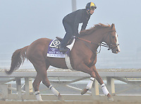 Shackleford, trained by Dale Romans,exercises in preparation for the upcoming Breeders Cup at Santa Anita Park on October 31, 2012.