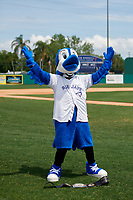 Dunedin Blue Jays mascot D-Jay before a Florida State League game against the Clearwater Threshers on April 7, 2019 at Jack Russell Memorial Stadium in Clearwater, Florida.  Dunedin defeated Clearwater 2-1.  (Mike Janes/Four Seam Images)